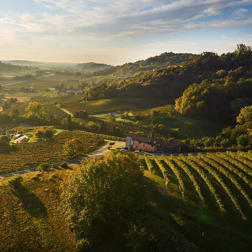 Prosecco Vineyards in Italy